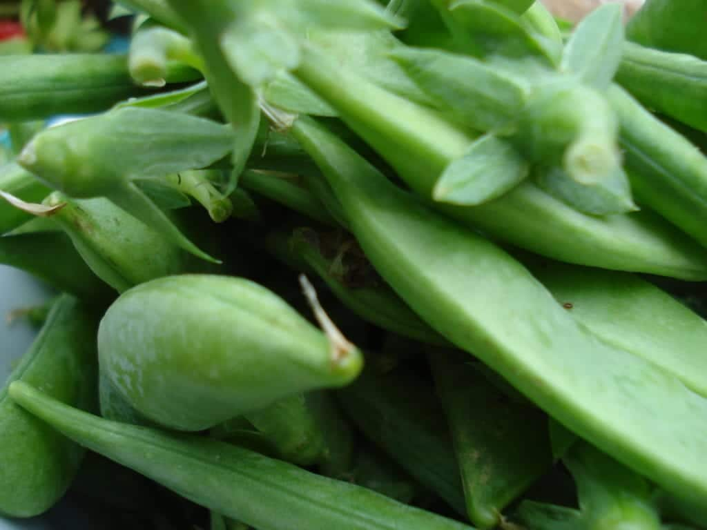 [Snap peas photo]